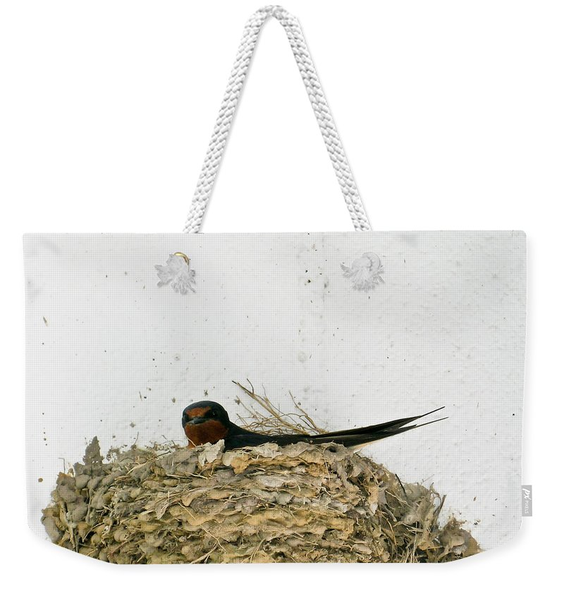 Barn Weekender Tote Bag featuring the photograph Barn Swallow Nesting by Douglas Barnett