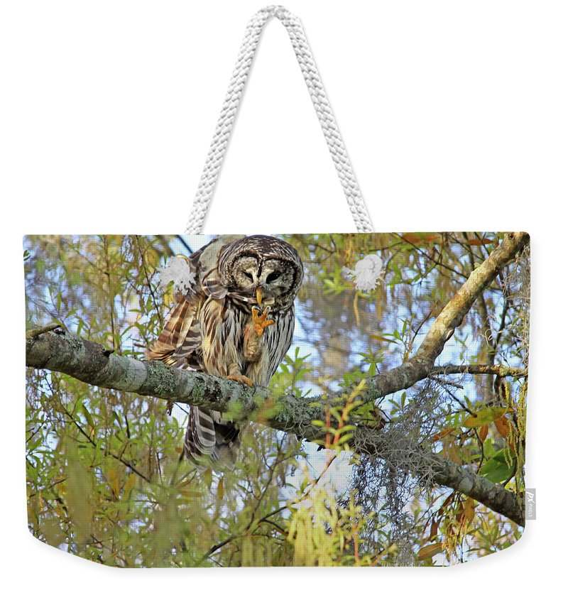 Owl Weekender Tote Bag featuring the photograph Barred Owl by Deborah Benoit