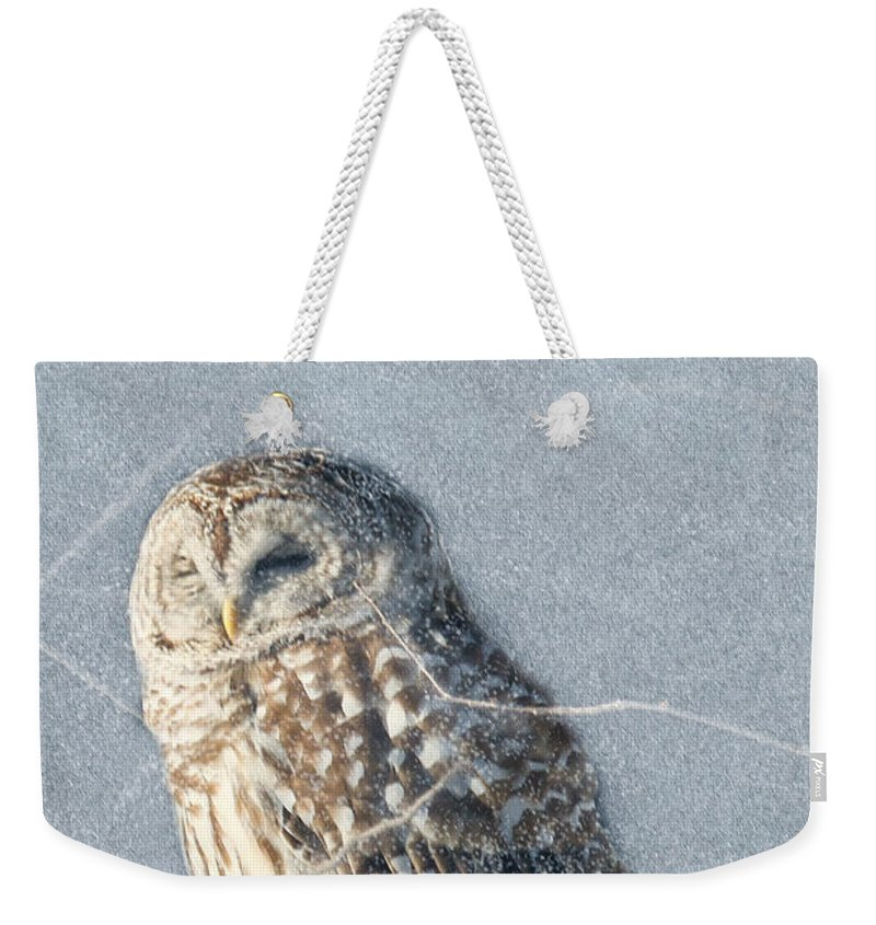Maine Wildlife Weekender Tote Bag featuring the photograph Barred Owl In The Snowstorm by Sharon Fiedler