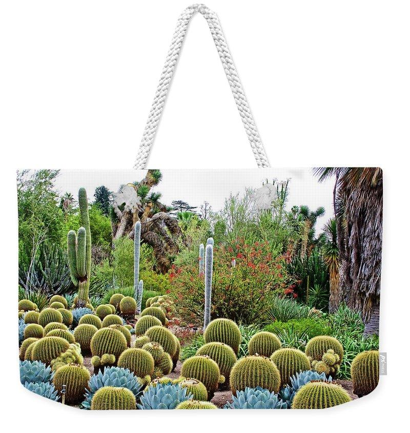 Barrel Cacti And Other Desert Plants In Huntington Desert Gardens In ...