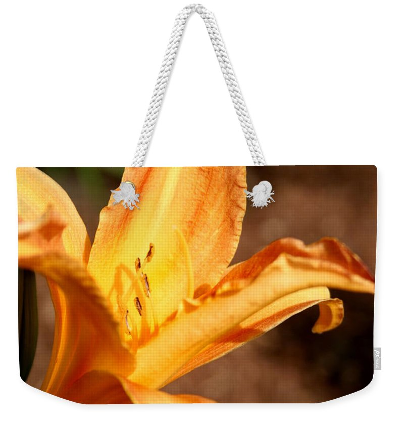 Basking In The Sun Weekender Tote Bag featuring the photograph Basking In The Sun by Chris Brannen