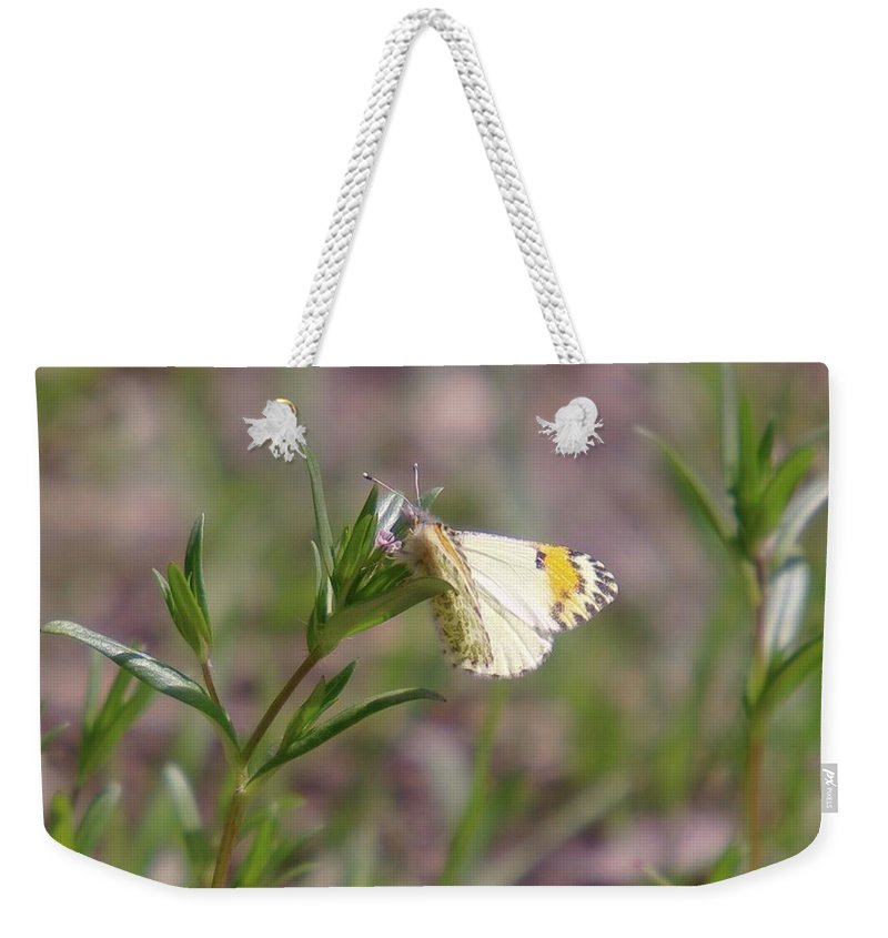 Moths Weekender Tote Bag featuring the photograph Basking In The Warmth by Jeff Swan