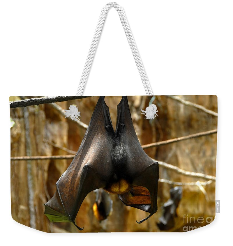 Bats Weekender Tote Bag featuring the photograph Bats by David Lee Thompson