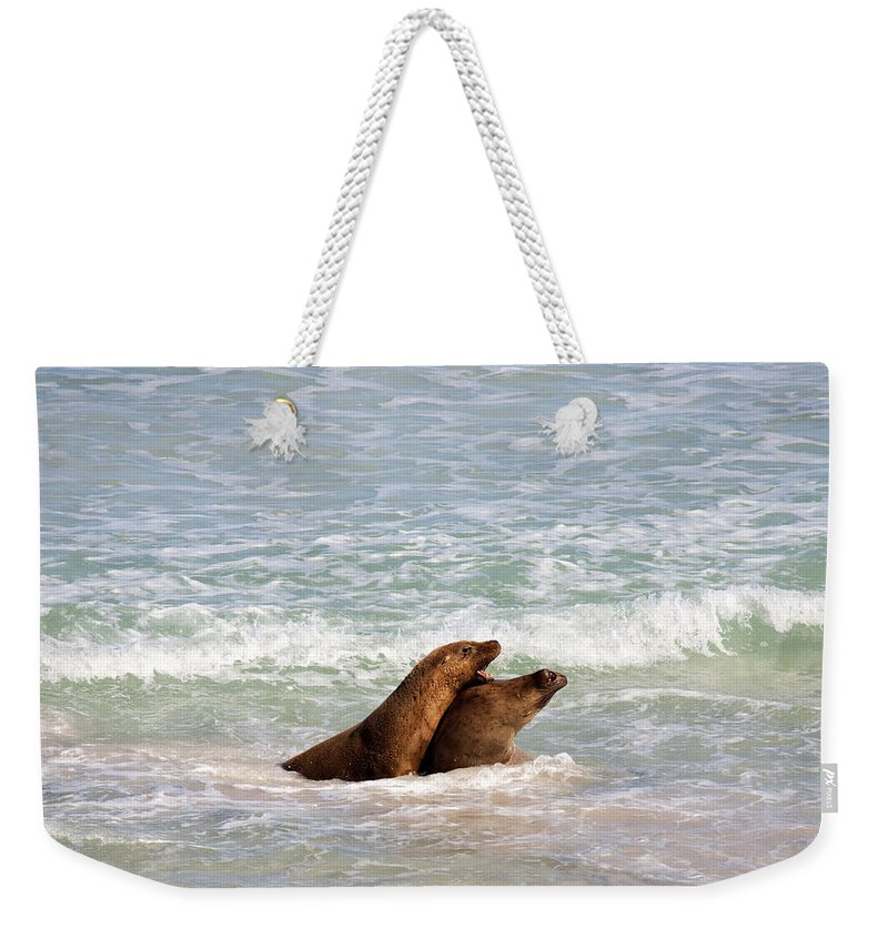 Sea Lion Weekender Tote Bag featuring the photograph Battle For The Beach by Mike Dawson