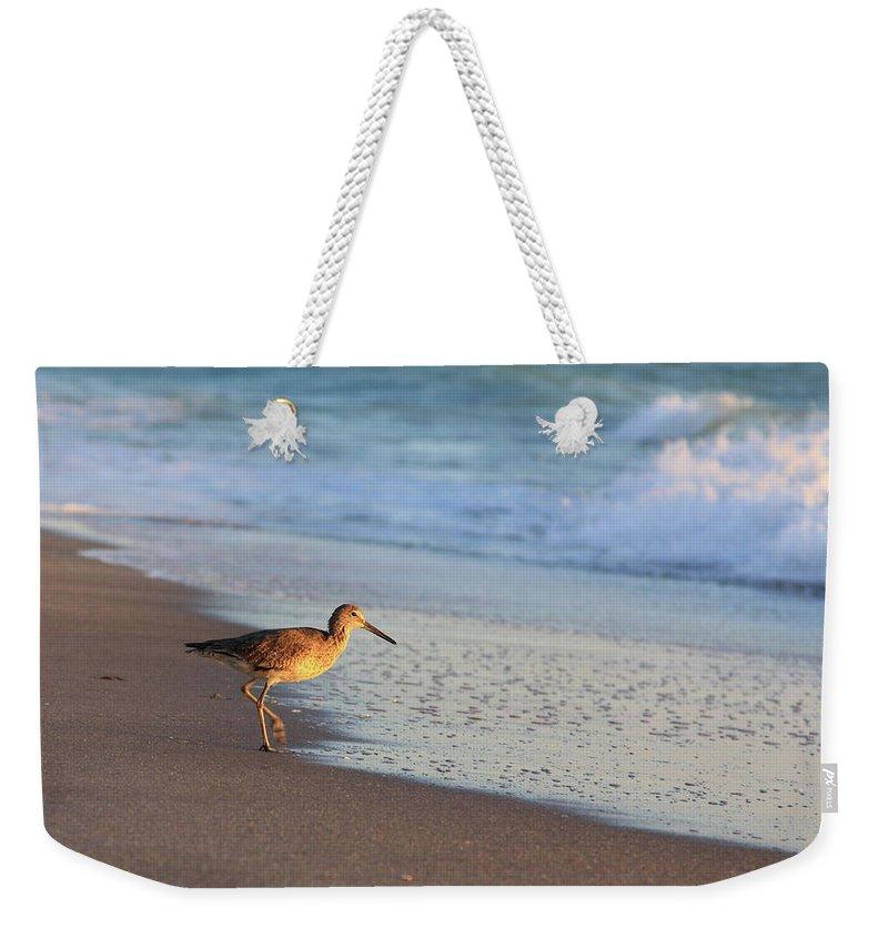 Bird Feathers Sandpiper Coast Beach Water Florida Waves Flight Photograph Photography Digital Fine Art Weekender Tote Bag featuring the photograph Beachcomer by Shari Jardina
