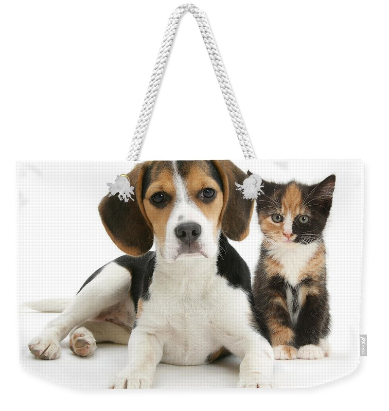 Animal Weekender Tote Bag featuring the photograph Beagle And Calico Cat by Mark Taylor