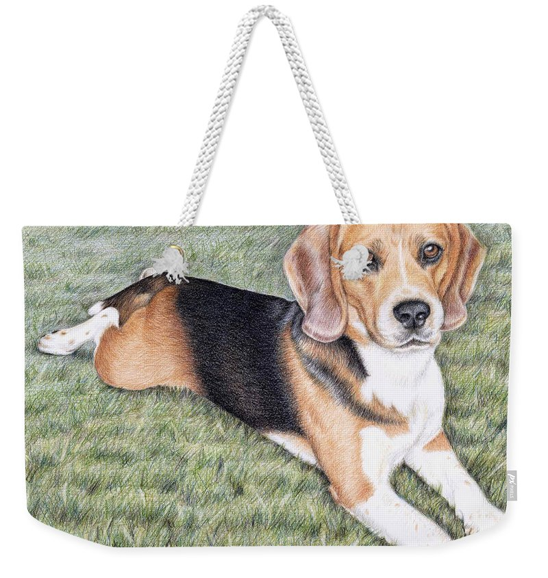 Dog Weekender Tote Bag featuring the drawing Beagle by Nicole Zeug