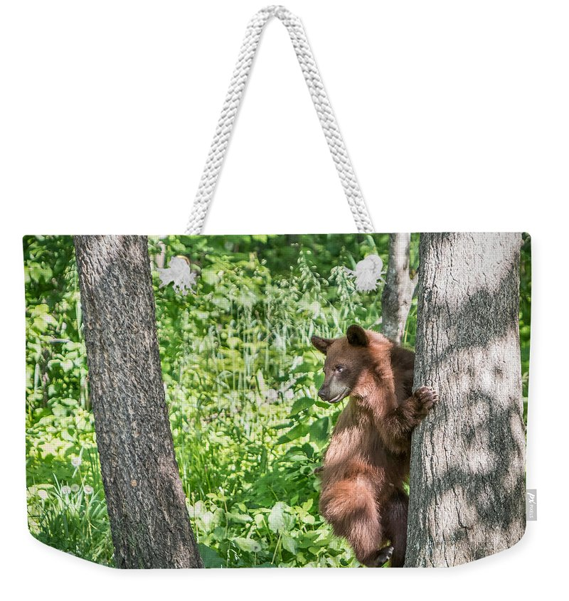 Bear Cub Weekender Tote Bag featuring the photograph Bear Cub Climb by Patti Deters