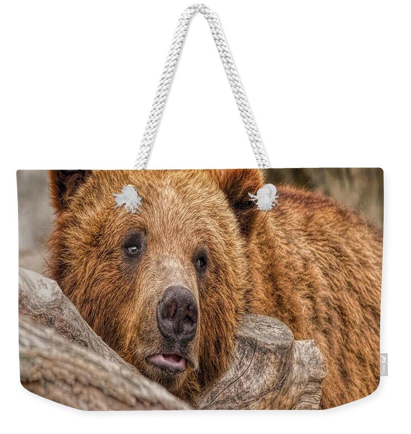 Nature Wear Weekender Tote Bag featuring the photograph Bear Nature Boy by LeeAnn McLaneGoetz McLaneGoetzStudioLLCcom
