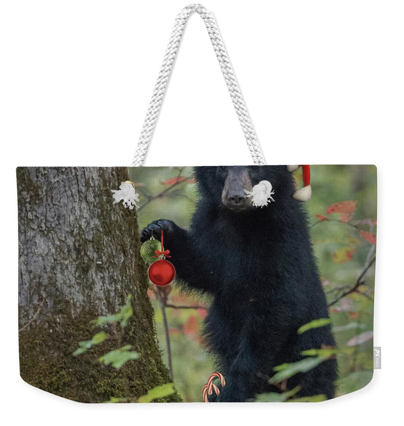 Bear Weekender Tote Bag featuring the photograph Beary Christmas Card by Everet Regal
