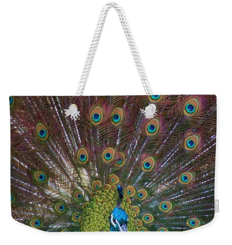 Peacock Weekender Tote Bag featuring the photograph Beautiful Peacock by Tina Meador