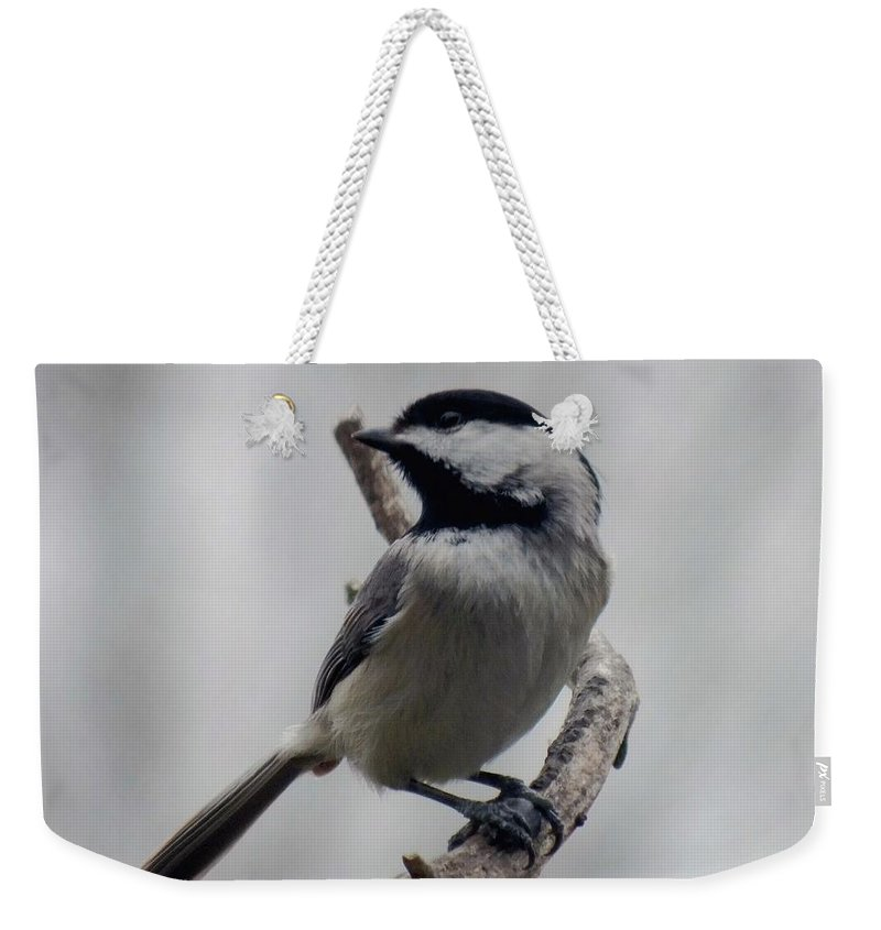 Black-capped Chickadee Weekender Tote Bag featuring the photograph Beautiful Pose - Black-capped Chickadee by Cindy Treger