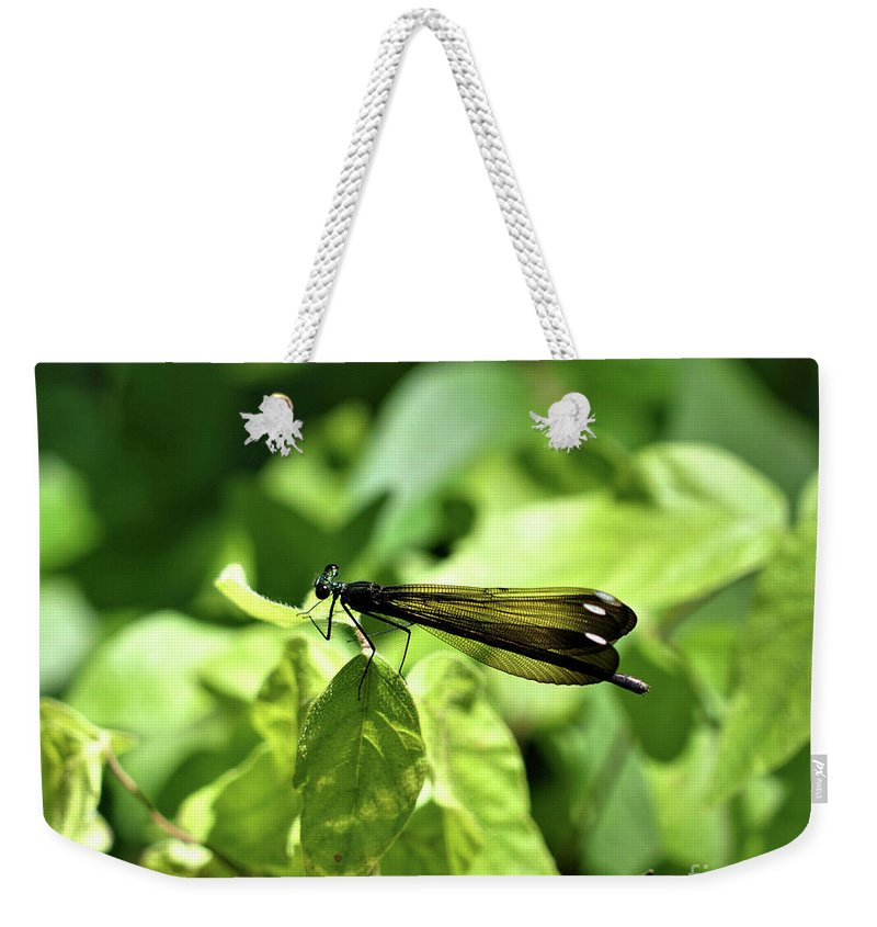 Dragon Fly Weekender Tote Bag featuring the photograph Beautiful Wings by Edna Weber