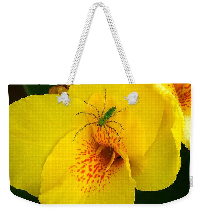 Spider Weekender Tote Bag featuring the photograph Beauty And The Beast by Robert Meanor