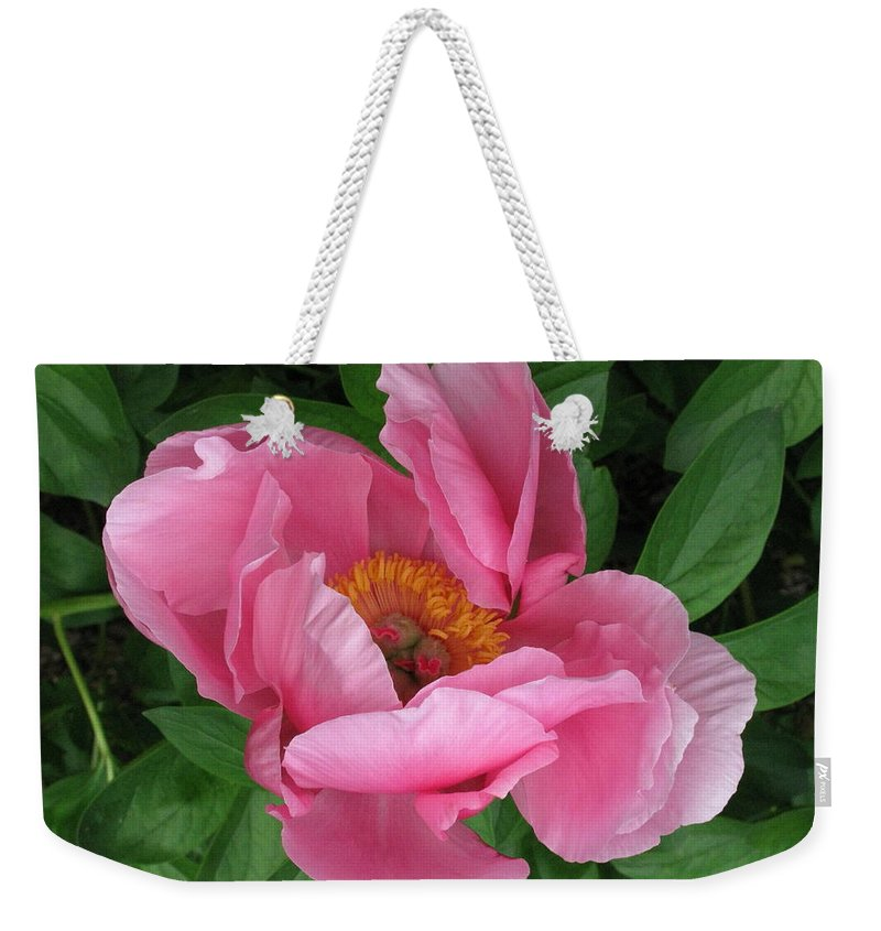Flower Weekender Tote Bag featuring the photograph Beauty Revealing Itself by Deborah Crew-Johnson