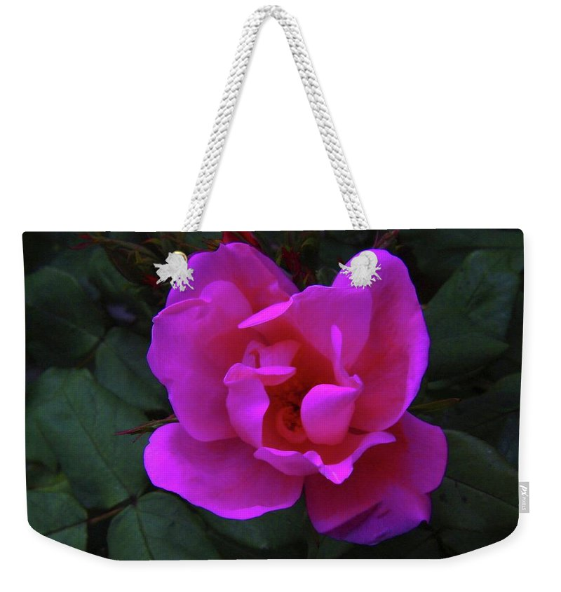 Blooms. Flowers In Bloom Weekender Tote Bag featuring the photograph Beauty Unfurls by Jeff Swan