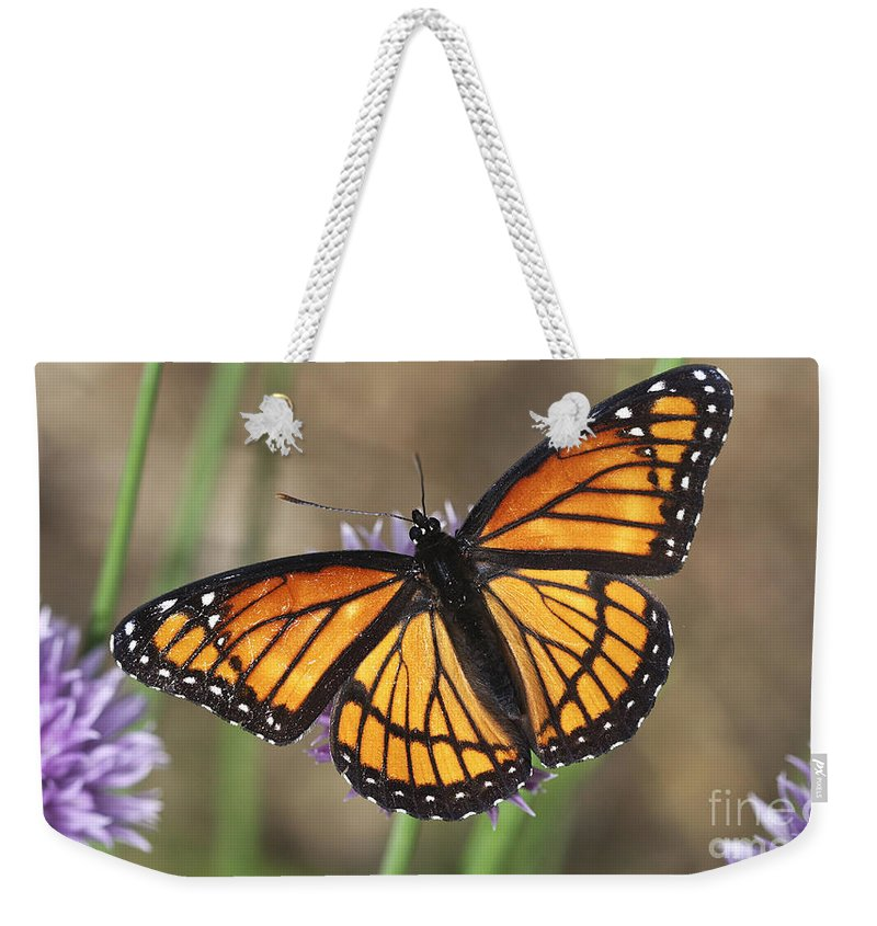 Weekender Tote Bag featuring the photograph Beauty With Wings by Deborah Benoit