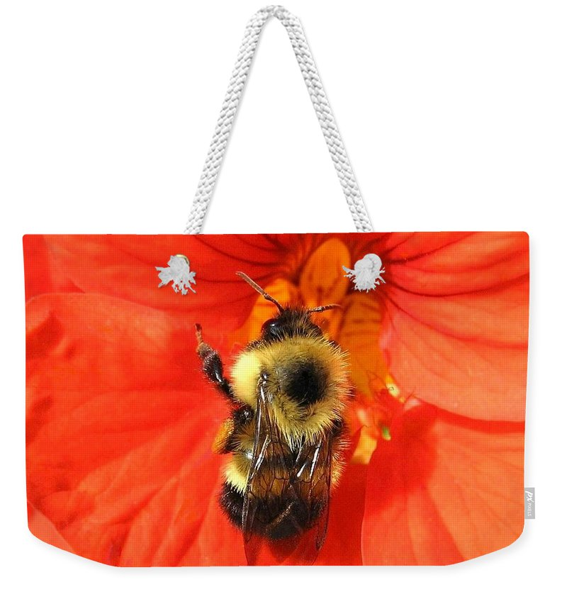 Bee Weekender Tote Bag featuring the photograph Bee And Nasturtium by Will Borden