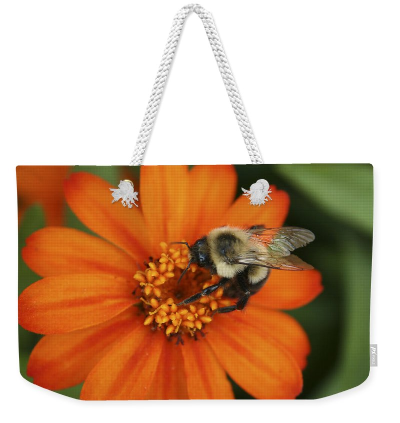 Bee Weekender Tote Bag featuring the photograph Bee On Aster by Margie Wildblood