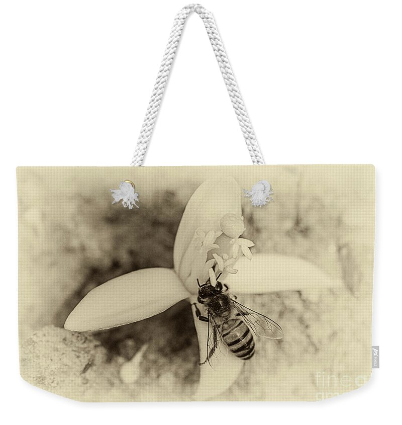 Bee Weekender Tote Bag featuring the photograph Bee On Citrus Flower by Elisabeth Lucas