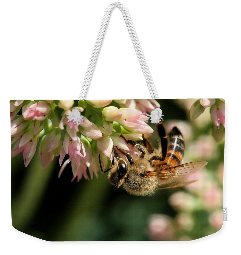 Bee Weekender Tote Bag featuring the photograph Bee On Flower 1 by Angela Rath
