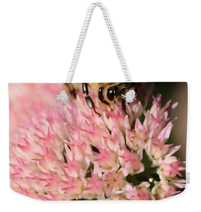 Bee Weekender Tote Bag featuring the photograph Bee On Flower 4 by Angela Rath