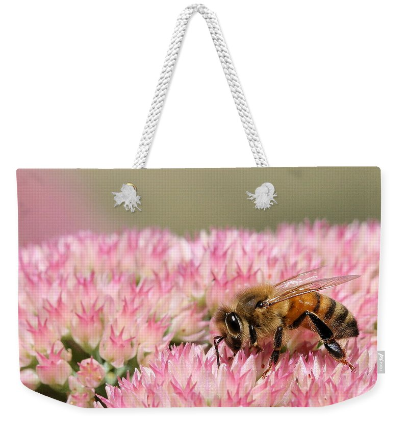 Bee Weekender Tote Bag featuring the photograph Bee On Flower 5 by Angela Rath