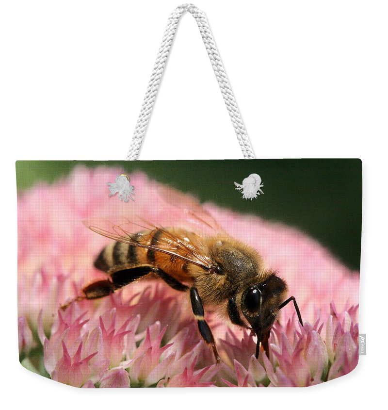 Bee Weekender Tote Bag featuring the photograph Bee On Flower 6 by Angela Rath