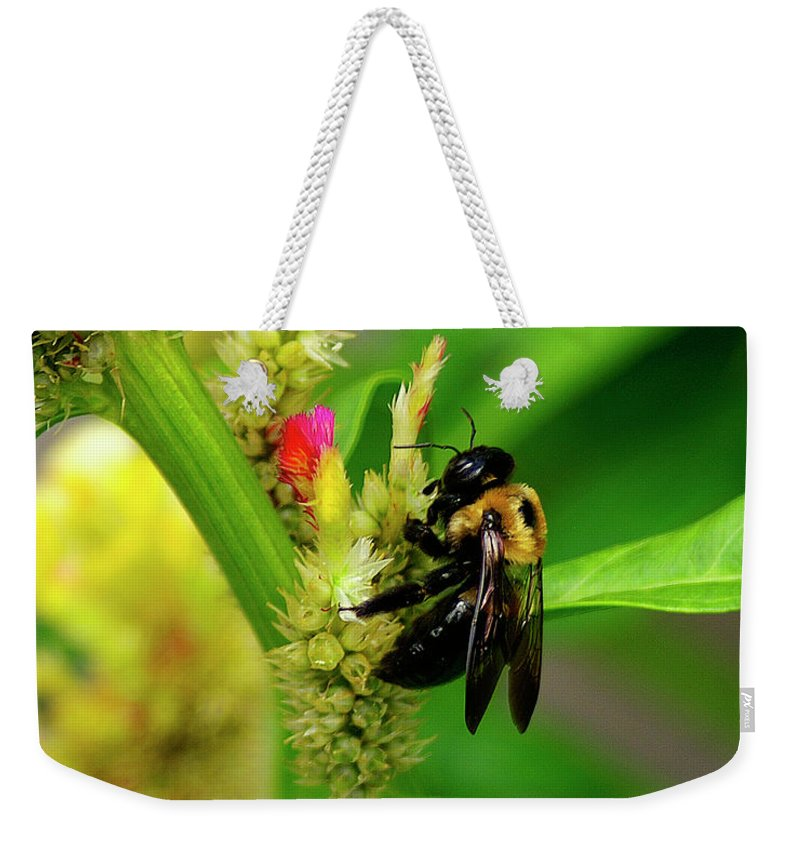Nature Weekender Tote Bag featuring the photograph Bee On Flower by Susan Cliett