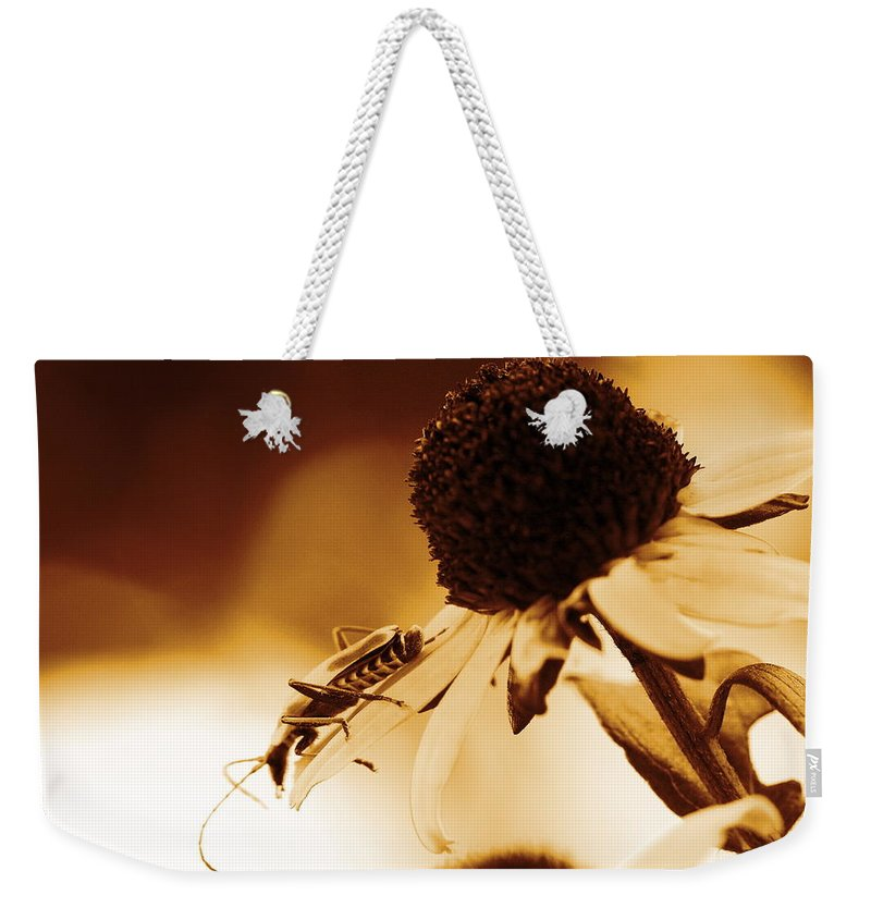 Leatherwing Weekender Tote Bag featuring the photograph Beetle And Black Eyed Susan by Angela Rath
