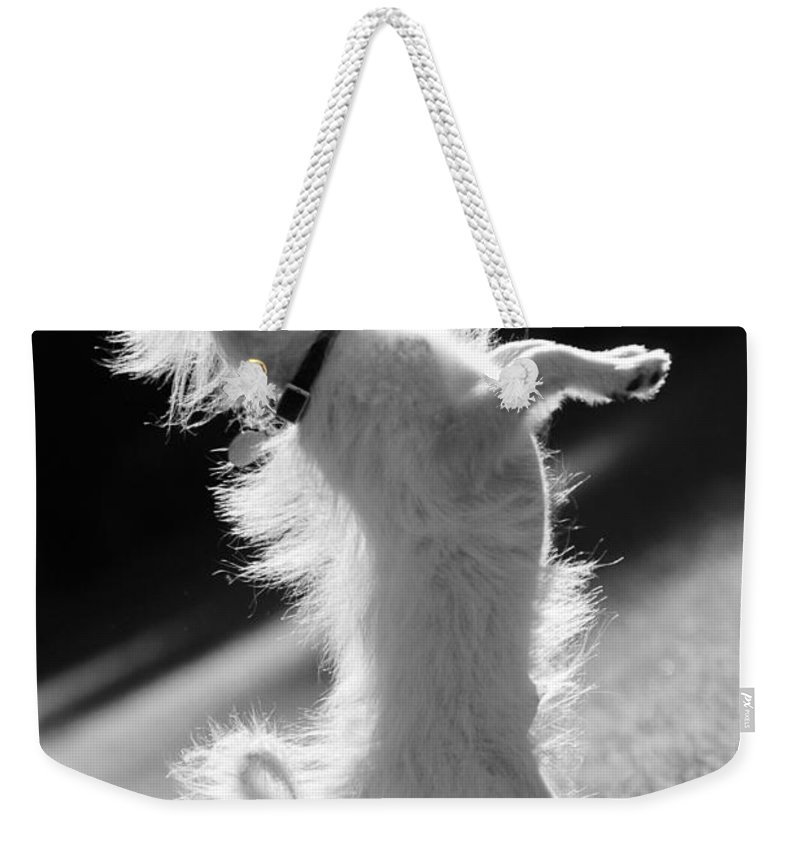 Black And White Weekender Tote Bag featuring the photograph Begging Dog Black And White by Jill Reger