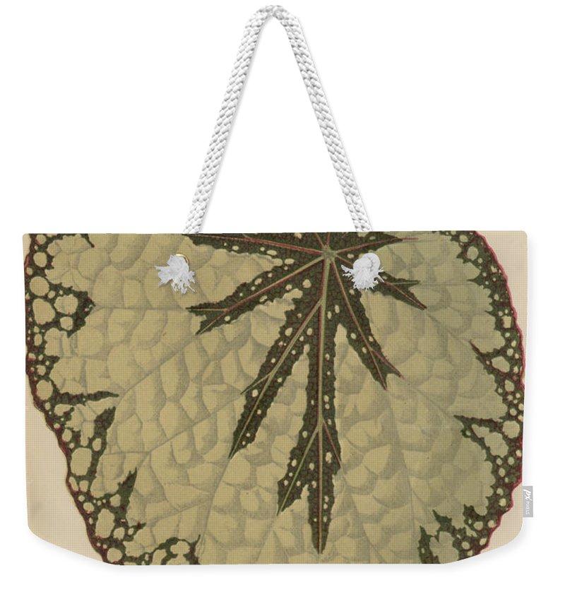Rex Cultorum Weekender Tote Bag featuring the painting Begonia Marshallii by English School