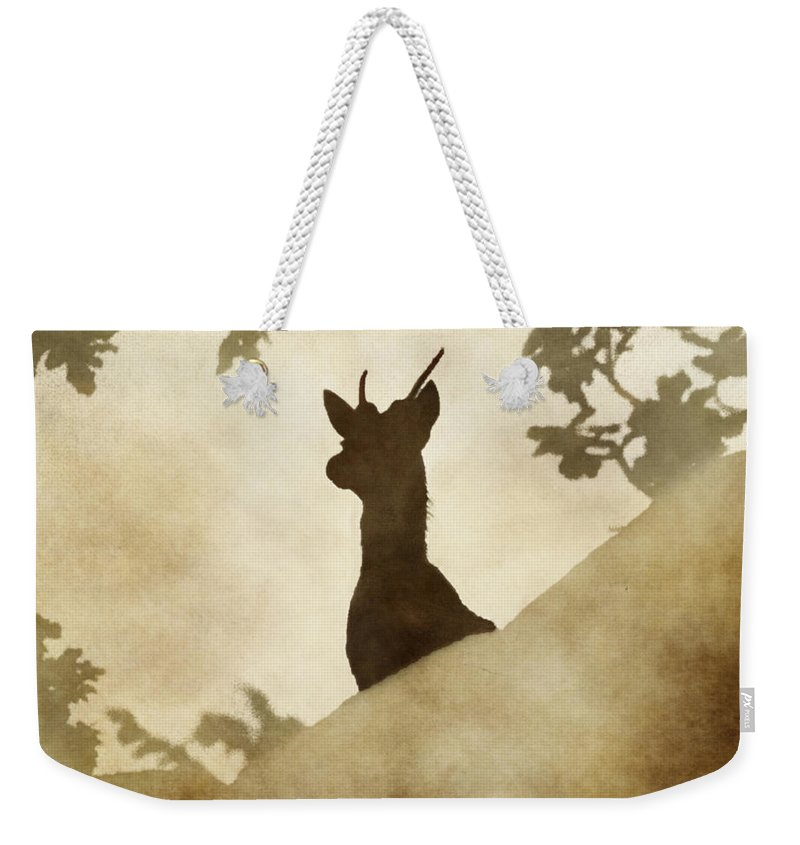 Stag Weekender Tote Bag featuring the photograph Behind The Rocks At Dawn by Linsey Williams