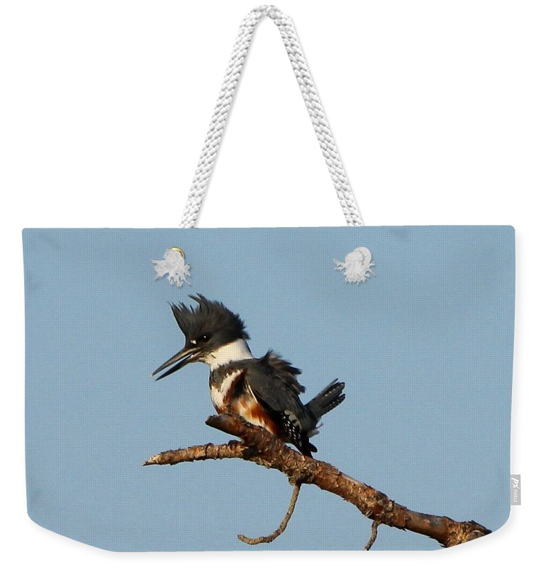 Belted Kingfisher Weekender Tote Bag featuring the photograph Belted Kingfisher by Barbara Bowen
