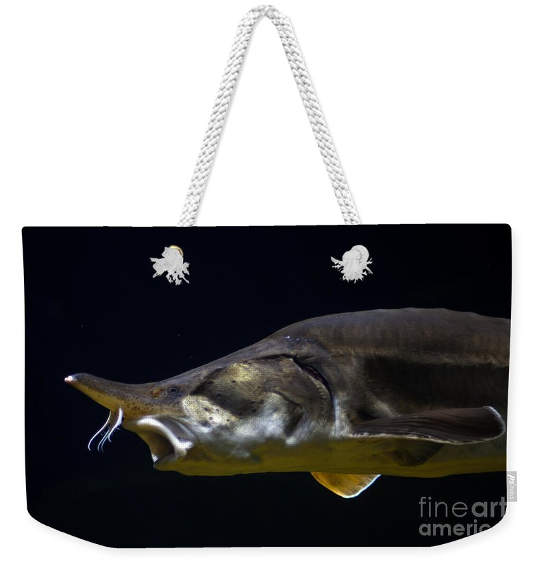 Alan Look Photography Weekender Tote Bag featuring the photograph Beluga Sturgeon No 1 by Alan Look
