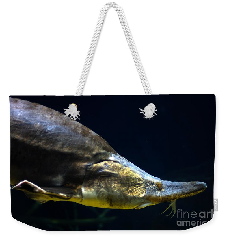 Alan Look Photography Weekender Tote Bag featuring the photograph Beluga Sturgeon No 2 by Alan Look