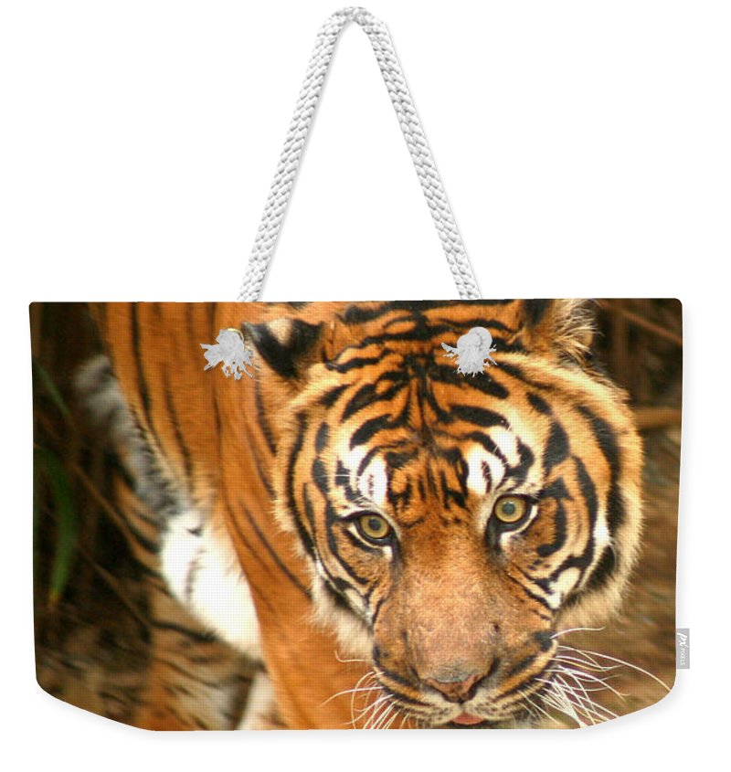 Bengal Weekender Tote Bag featuring the photograph Bengal Tiger by Thomas Marchessault