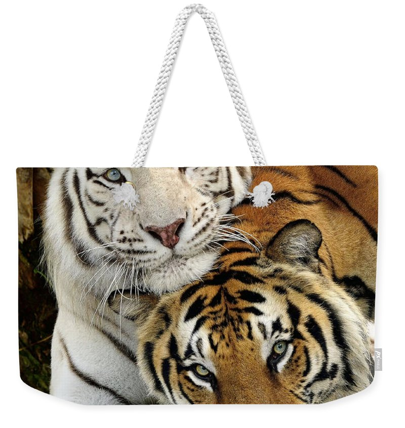 Bengal Tigers Weekender Tote Bag featuring the photograph Bengal Tigers At Play by Bill Dodsworth