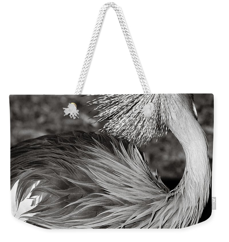 Bird Weekender Tote Bag featuring the photograph Best Feathers Ever by Marilyn Hunt