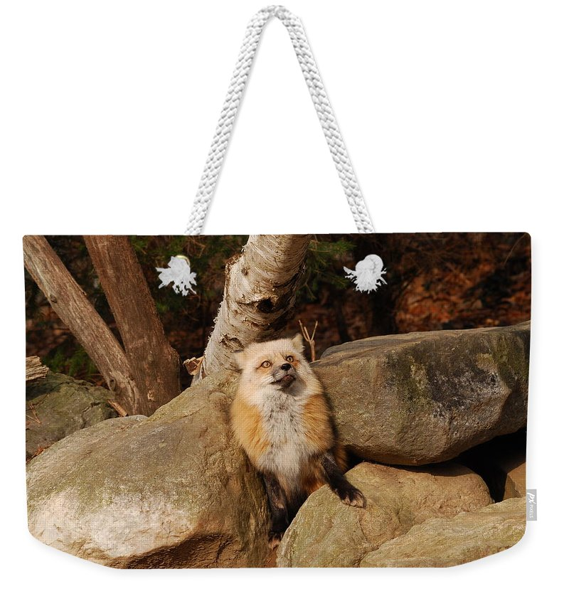 Fox Weekender Tote Bag featuring the photograph Best Foot Forward by Lori Tambakis