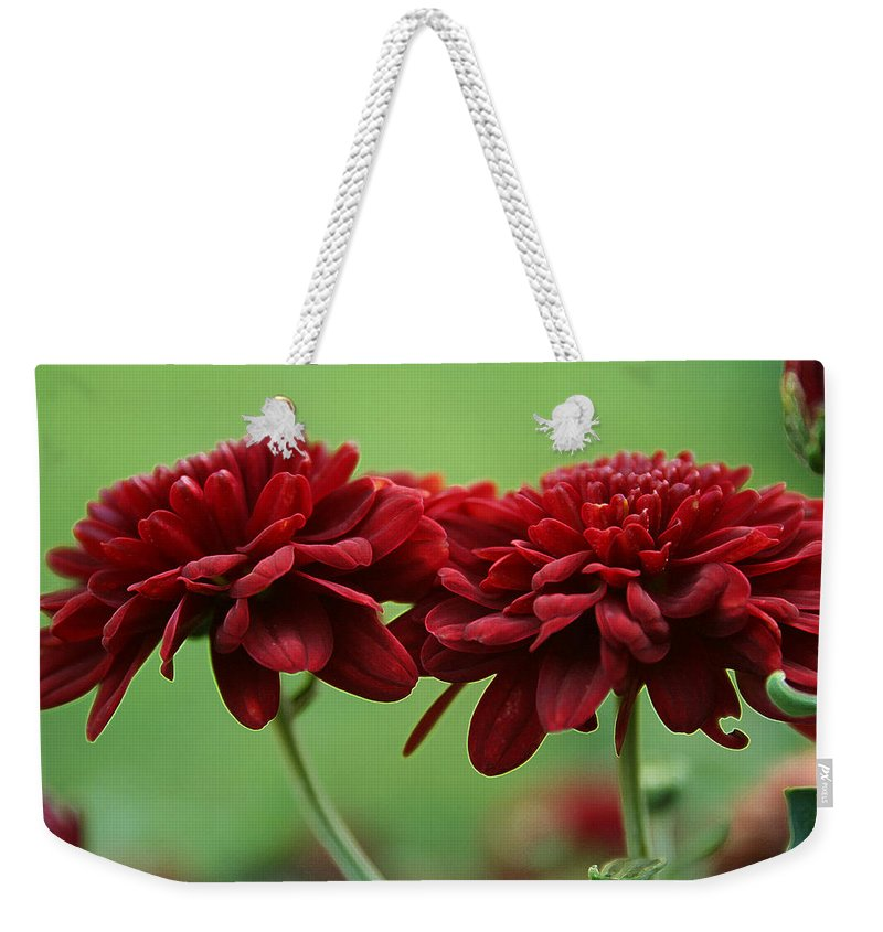 Best Friends Weekender Tote Bag featuring the photograph Best Friends by Linda Sannuti