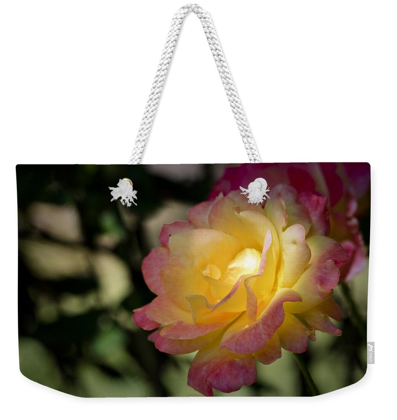 Rose Weekender Tote Bag featuring the photograph Bettys Rose by Teresa Mucha