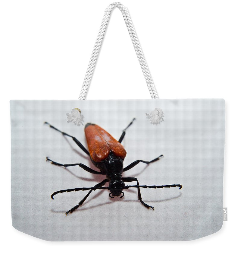 Insect Weekender Tote Bag featuring the photograph Big Beetle by Douglas Barnett