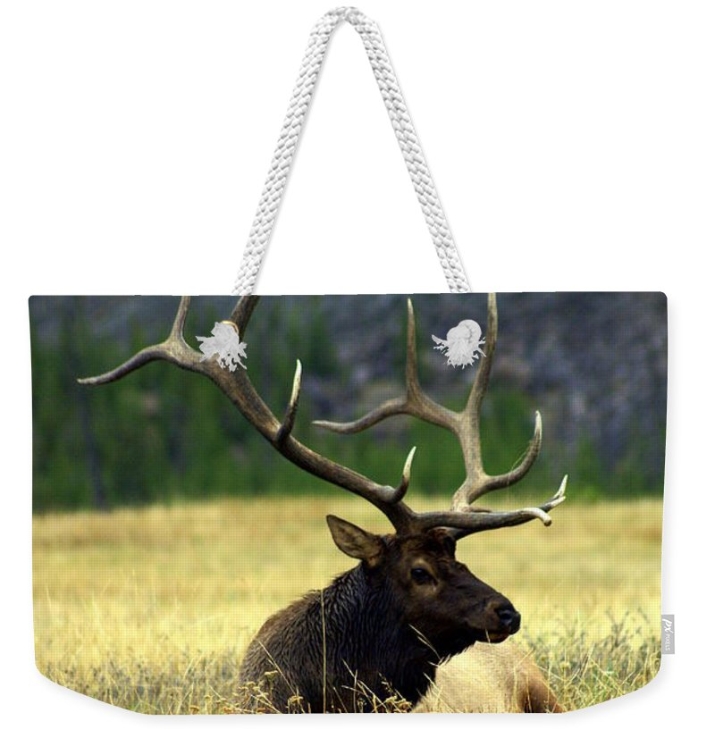 Weekender Tote Bag featuring the photograph Big Bull 2 by Marty Koch