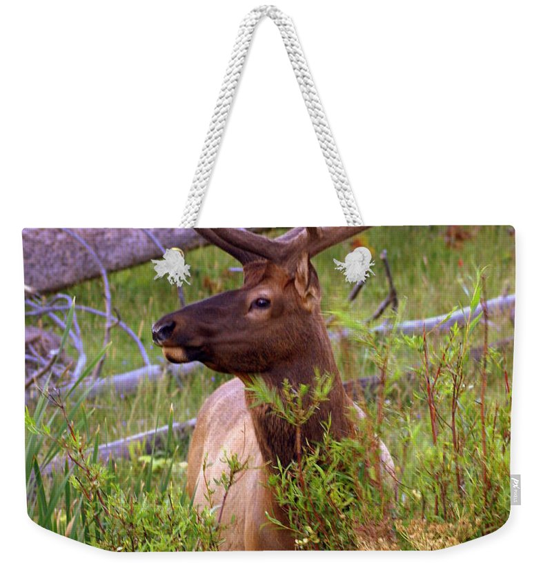 Bull Elk Weekender Tote Bag featuring the photograph Big Bull by Marty Koch