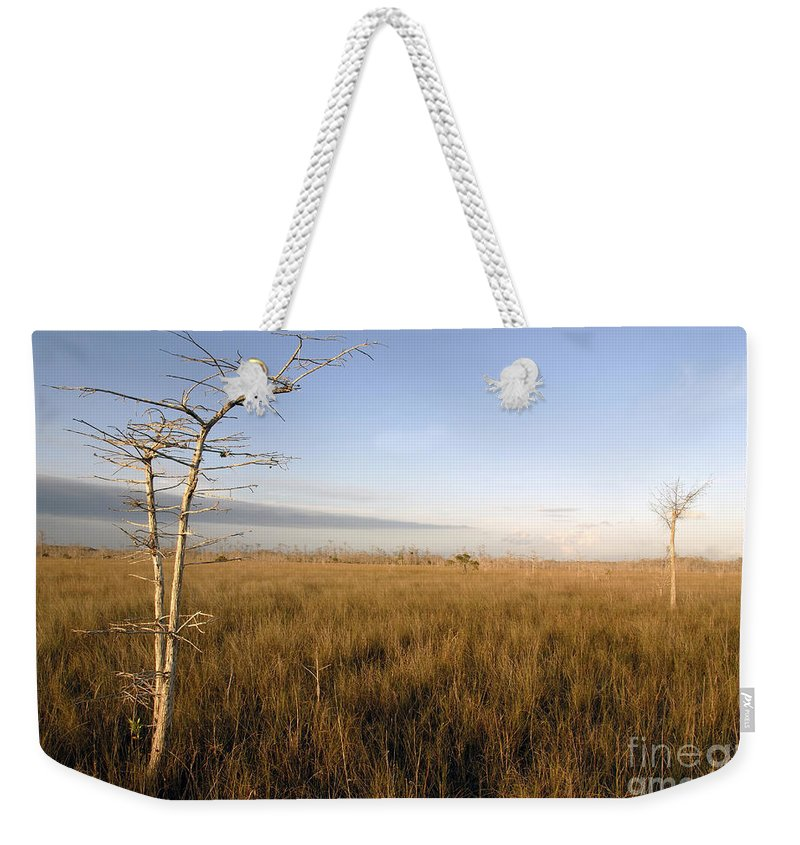 Bald Cypress Weekender Tote Bag featuring the photograph Big Cypress by David Lee Thompson