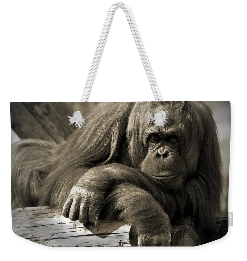 Orangutang Weekender Tote Bag featuring the photograph Big Hands II by Steven Sparks