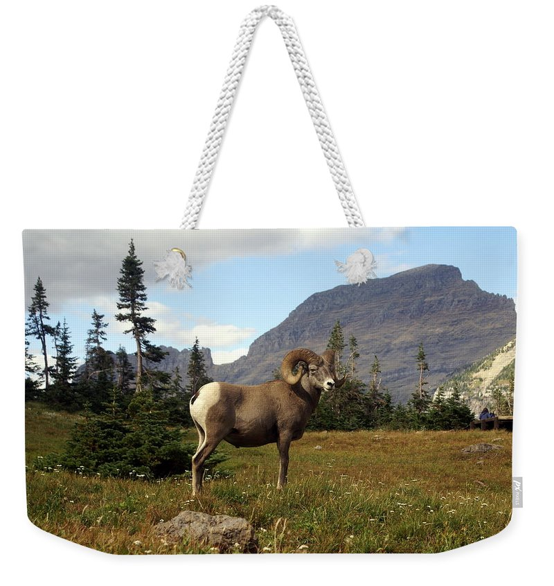 Big Horn Ram Weekender Tote Bag featuring the photograph Big Horn 4  by Marty Koch
