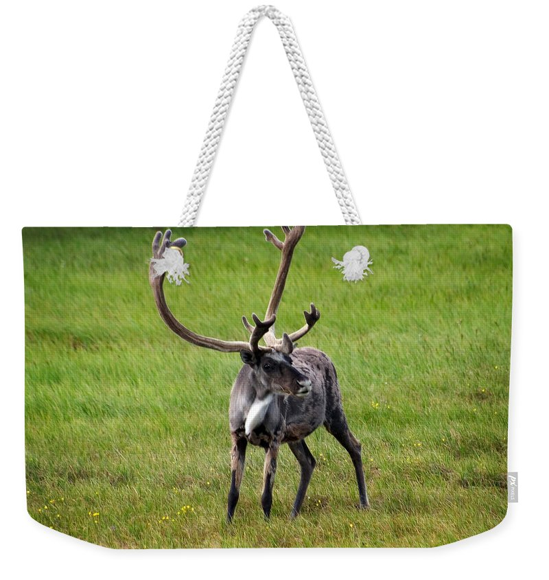 Caribou Weekender Tote Bag featuring the photograph Big Horn by Anthony Jones