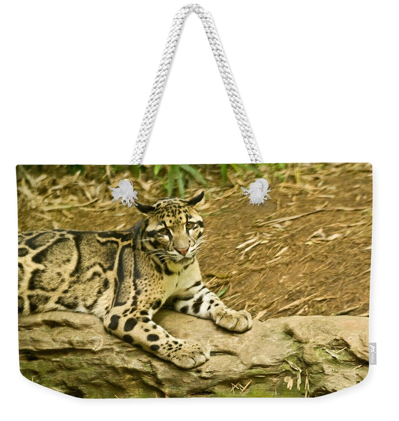 Cat Weekender Tote Bag featuring the photograph Big Kitty Cat by Douglas Barnett
